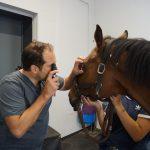 Augenuntersuchung: Direkte Ophthalmoskopie