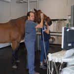 Augenuntersuchung mittels Ultraschall